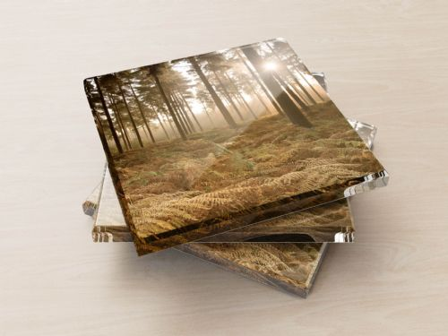 Misty Autumn Forest - Glass Coasters